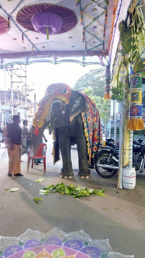 Wedding Elephant Madurai Events Here you can explore hq marriage transparent illustrations, icons and clipart with filter setting like size, type, color etc. wedding elephant madurai events